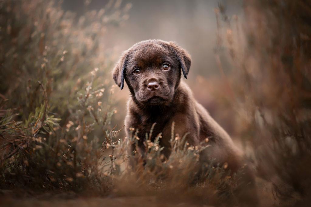 Hondenfotografie dierenfotografe honden fotoreizen