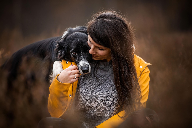 Border Collie lcpd honden fotografie