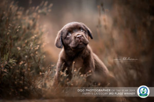 Dogphotographer of the year 2019 foscofotografie lotte van alderen 3rd place category puppy