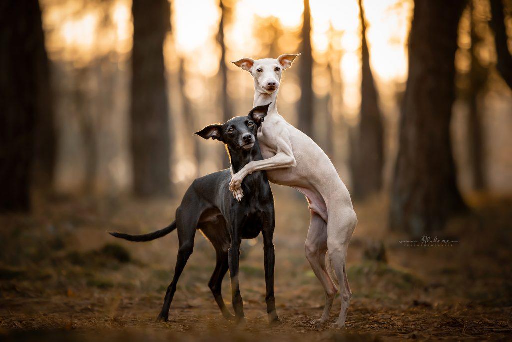 honden trucjes - hondenfotografie