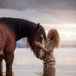 Shire fotoreis paardenfotografie