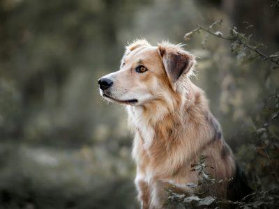 Kruising Mixbreed hondenfotografie